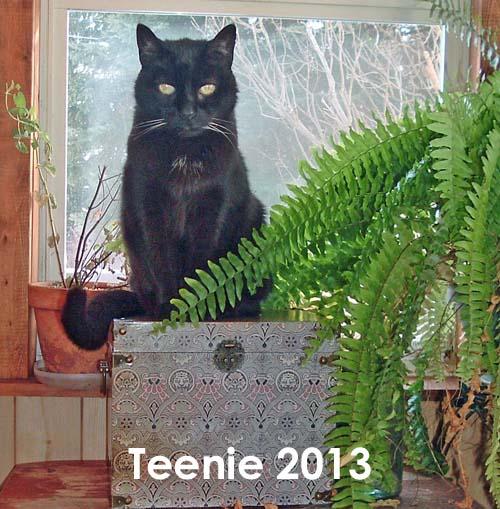 Teenie, 2013